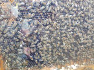 Jugendgruppe beim Bienenhof